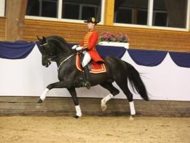 don-index-hanoverian-stallion-black-dressagehorses-sire-leisurehorses-eventinghorses-ankum-998253_2
