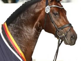 stallion-franziskus-07
