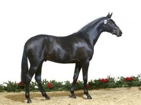 horse_rocky_lee-_2big