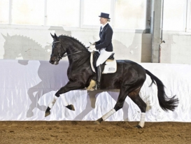 horse_rocky_lee-_3big